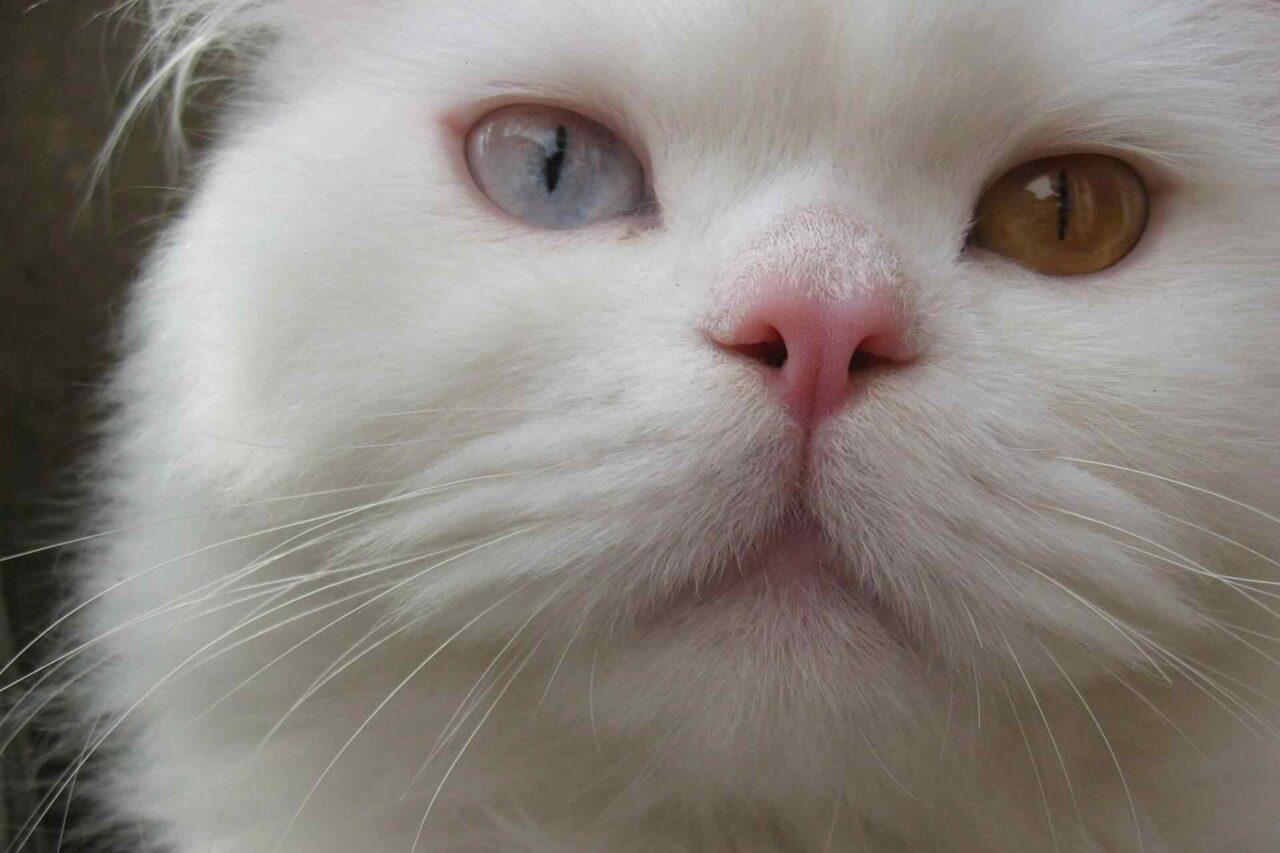 PETS cats1