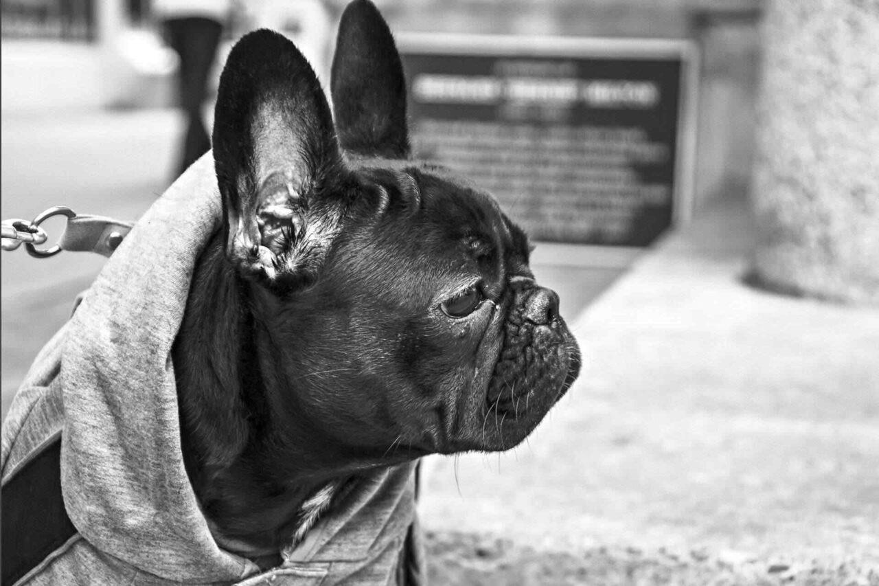 PETS-dog2-1280x853.jpg